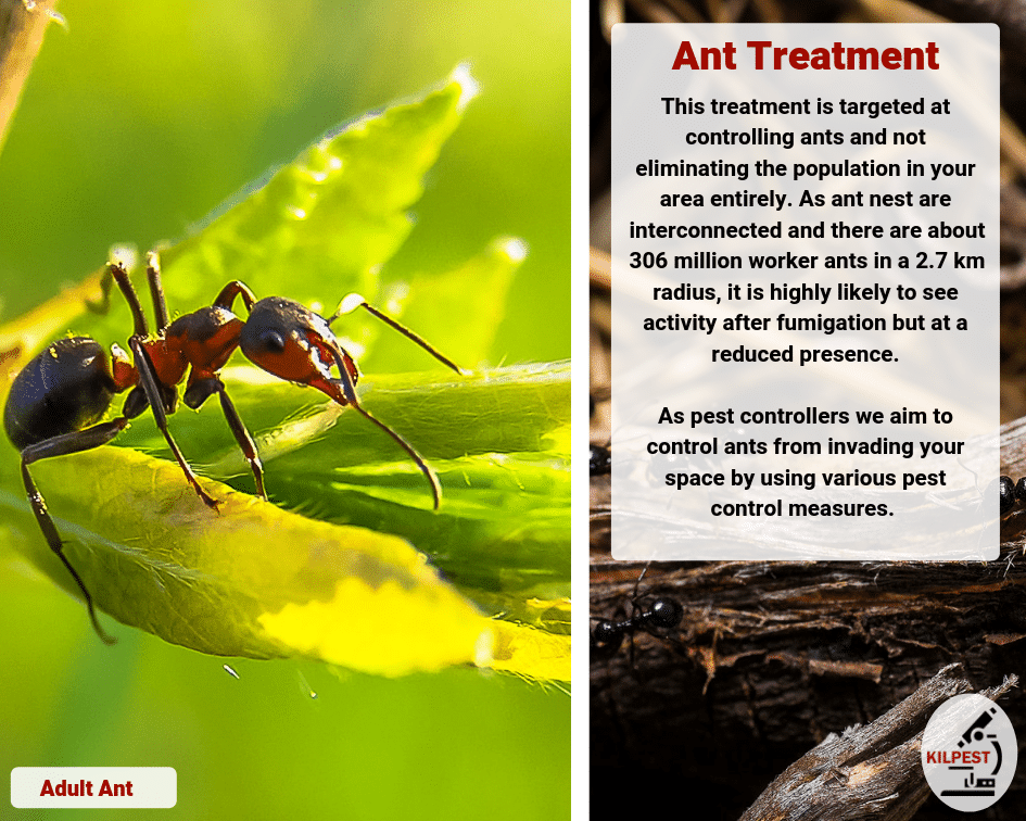 Ant Treatment And Extermination South Africa Kilpest