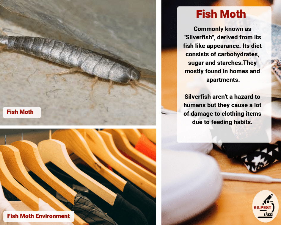 Fish Moth Control - South Africa - Kilpest